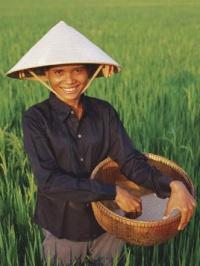 Нива с ориз