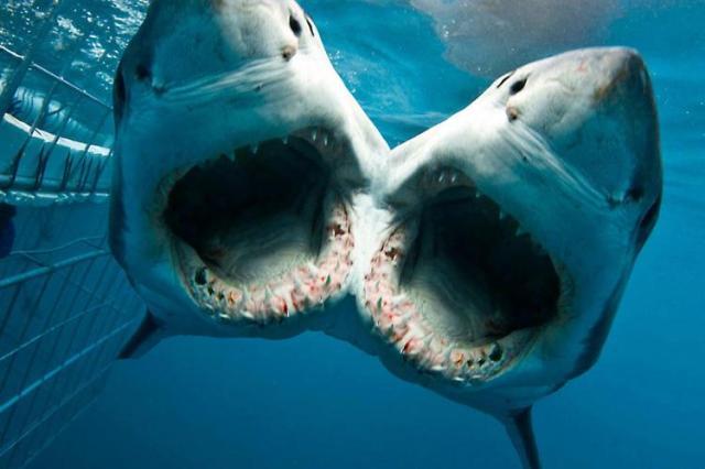 филми за акули