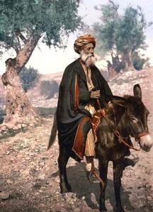 Riding-Donkey